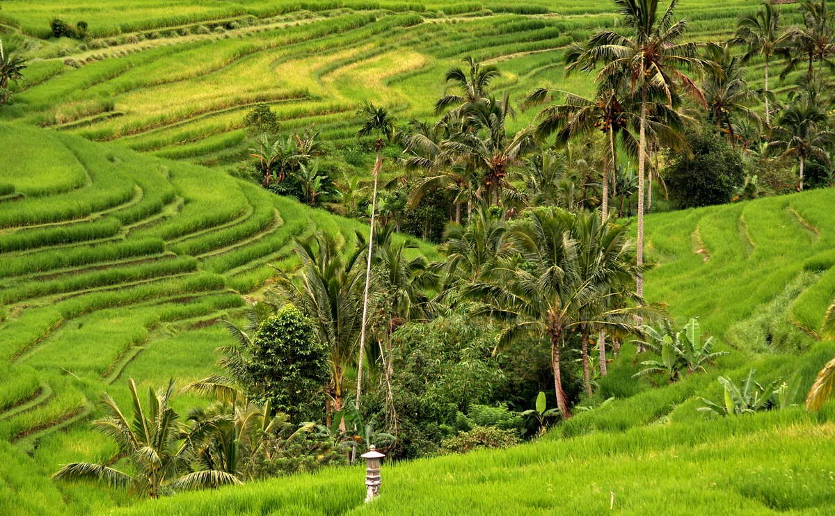 REISLANDSCHAFT - JATILUWIH - BALI - INDONESIEN-INDONESIA