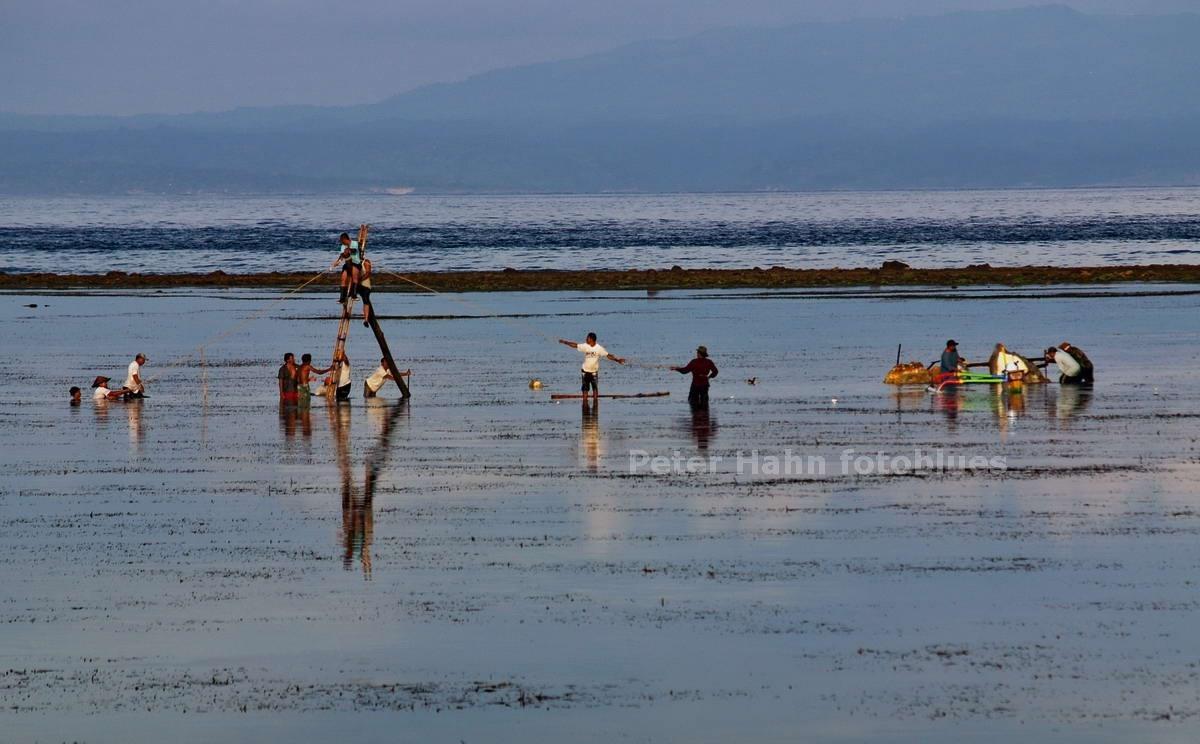 GROSSSTEINSUCHER IM MEER - SANUR - BALI - INDONESIEN-INDONESIA