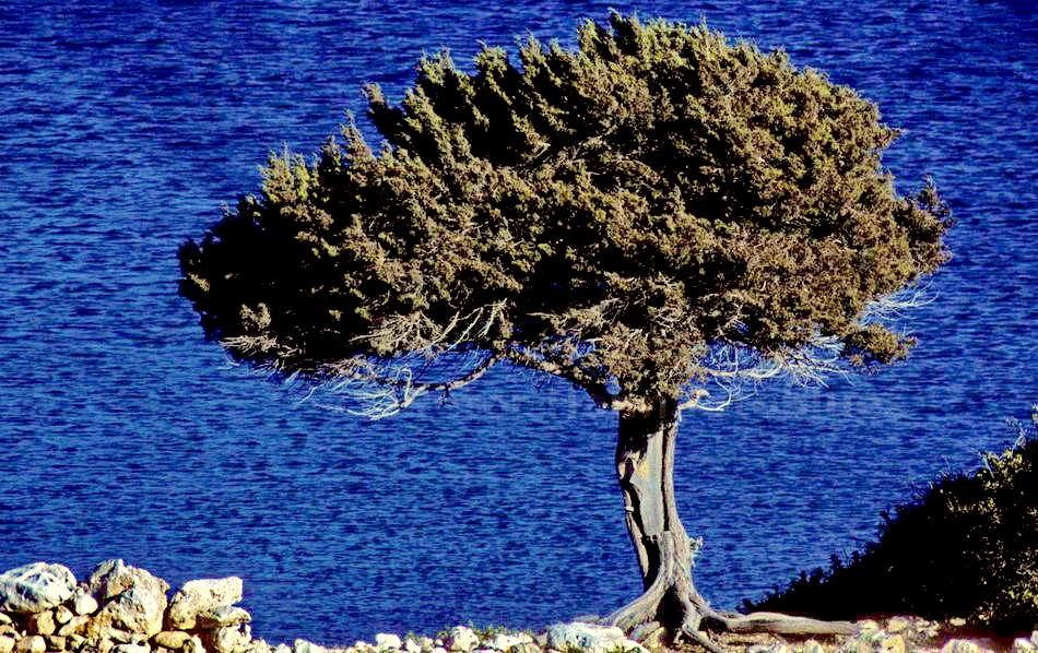 AMMOPI - INSEL KARPHATOS - GRIECHENLAND-GREECE - MEIN BAUMBILD