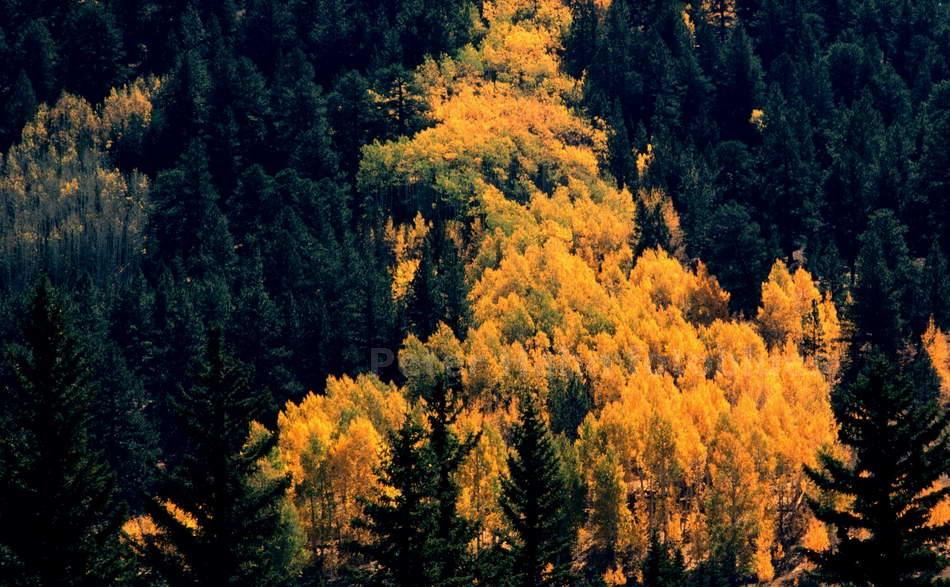 BOULDER MOUNTAINS - UTAH - USA