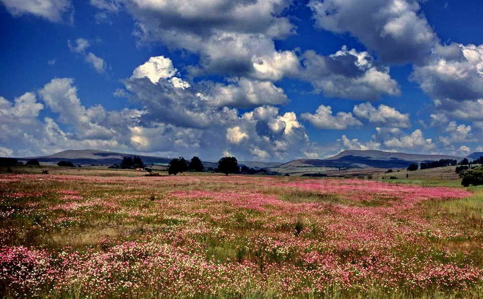 PILGREM'S REST - MPUMALANGA - SOUTH AFRICA - BLUMENWIESE