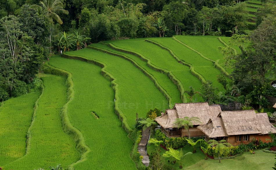PACUNG - BALI-INDONESIA - REISFELDER